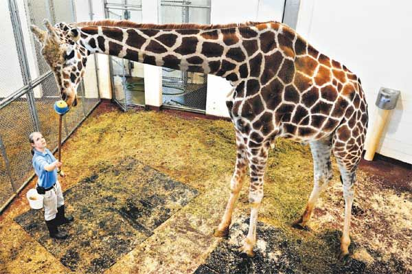 52 best zoo animals and veterinary procedures images on