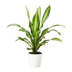 Növények, kaspók és állványok - IKEA