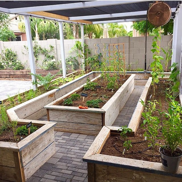 Creating Our First Vegetable Garden Advice Please: Vegetable Garden Raised Beds