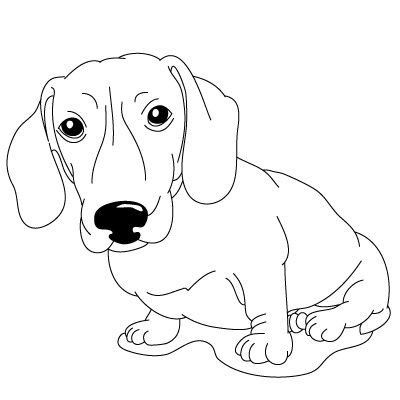 16 best Dachshund Coloring Pages images on Pinterest Dachshund dog - best of coloring pages baby dog