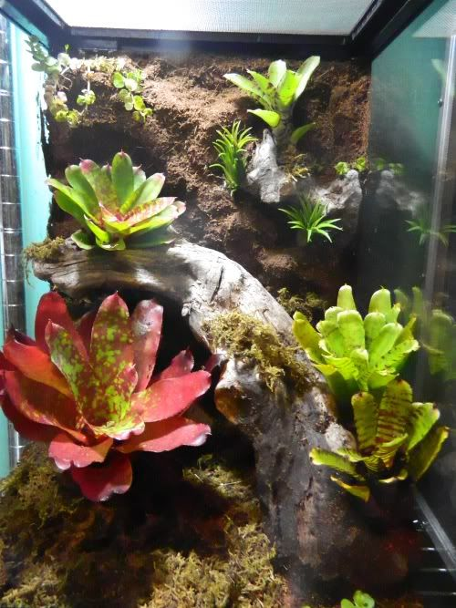 52 Best Awesome Reptile Terrariums Amp Vivariums Images On
