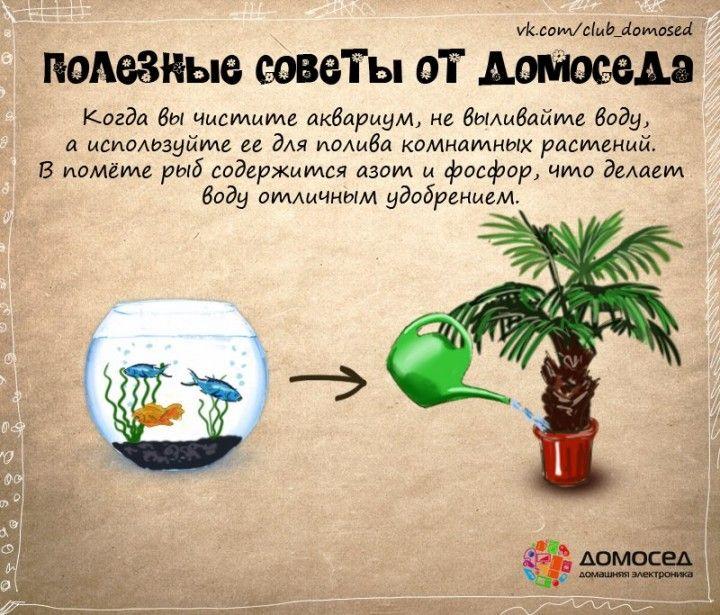 Вода из аквариума может пригодиться