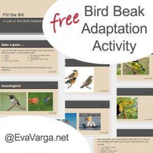 Bird Beak Adaptation Activity - free PowerPoint Presentation ⎜Eva Varga