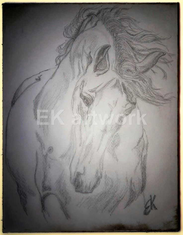 """""""God made the horse from the breath of the wind, the beauty of the earth and the soul of an angel..."""" Quote."""