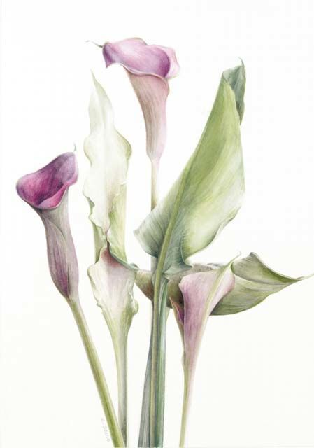 Botanical Paintings by Elaine Searle https://www.pinterest.com/ccclr/botanicals/