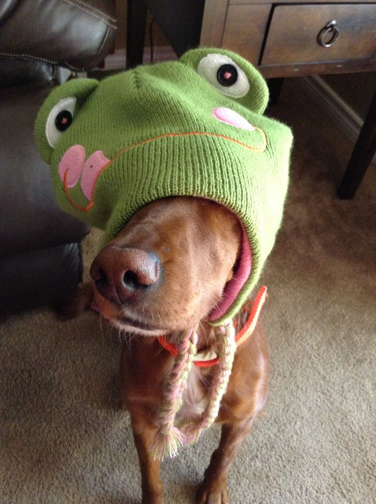 Wanna be frog. Rosie is so photogenic!