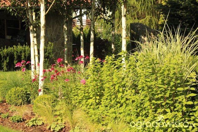 Ogród Sylwii od początku cz.II - strona 1168 - Forum ogrodnicze - Ogrodowisko