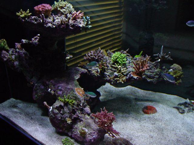 Floating salt water reef | Aquarium Ideas | Pinterest ...