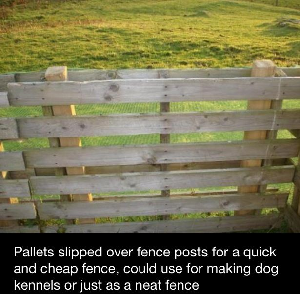 Pallet slipped over fence posts for quick fencing. Great for a fast patio fence or even dog containment.