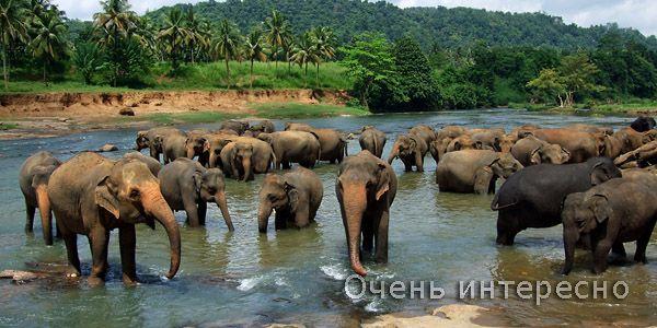 Шри-Ланка, позволяет насладиться экзотической природой, купанием в океане, отдыхом на великолепных пляжах