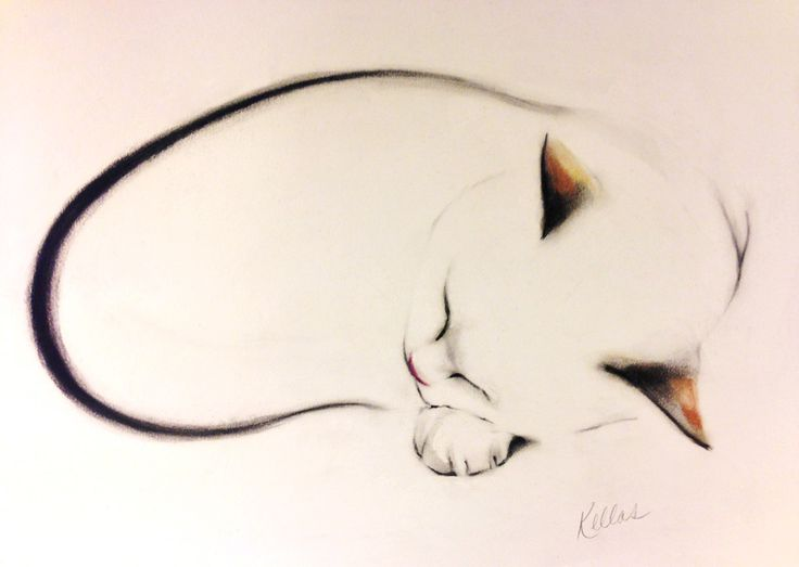 Kellas Campbell--My latest drawing of my cat, Charlie.  This is size A3 (42 by 29.7 cm).