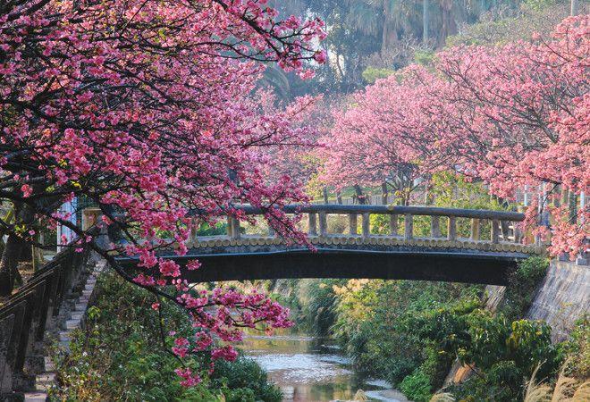 Розовые животные, розовая птица фото - Getty