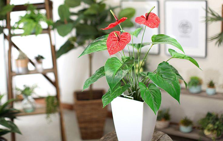 光触媒人工観葉植物(フェイクグリーン)3190「アンスリューム +白プラ 65cm」