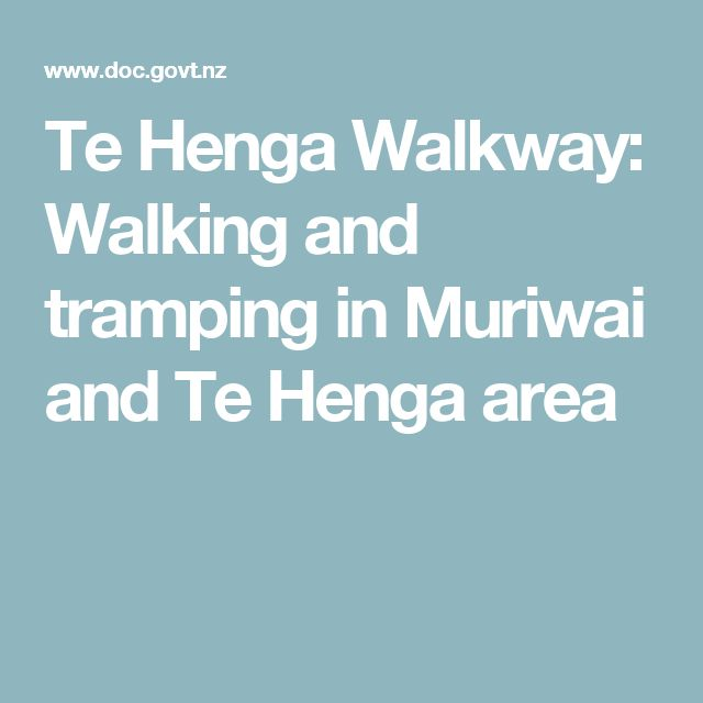 Te Henga Walkway: Walking and tramping in Muriwai and Te Henga area