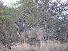 Wildlife of South Africa - Wikipedia, the free encyclopedia