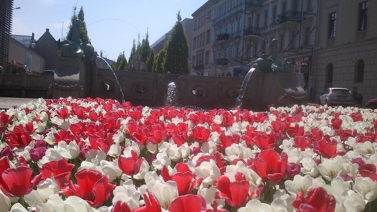 Fontanna na al. Marcinkowskiego | Fountain at the Marcinkowskiego Avenue