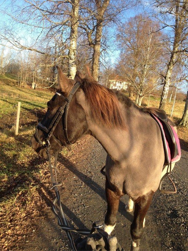Elliinadolfsson - blogg