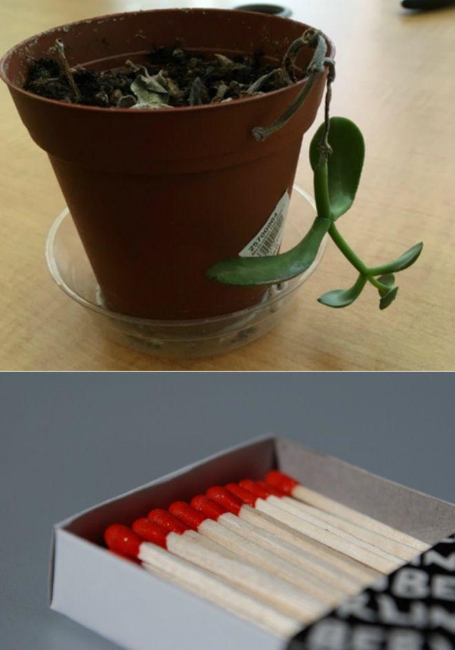 Толковый цветовод знает, для чего втыкать спички в горшки с растениями! | Подоконник | Постила
