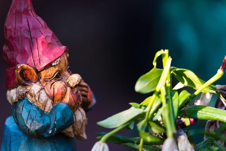 Oh No! - Garden gnome reacting to a broken plant