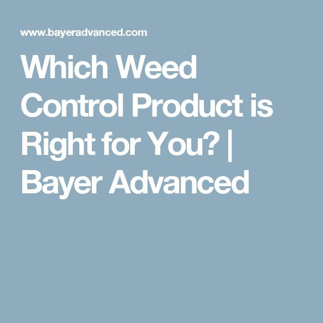 Which Weed Control Product is Right for You? | Bayer Advanced