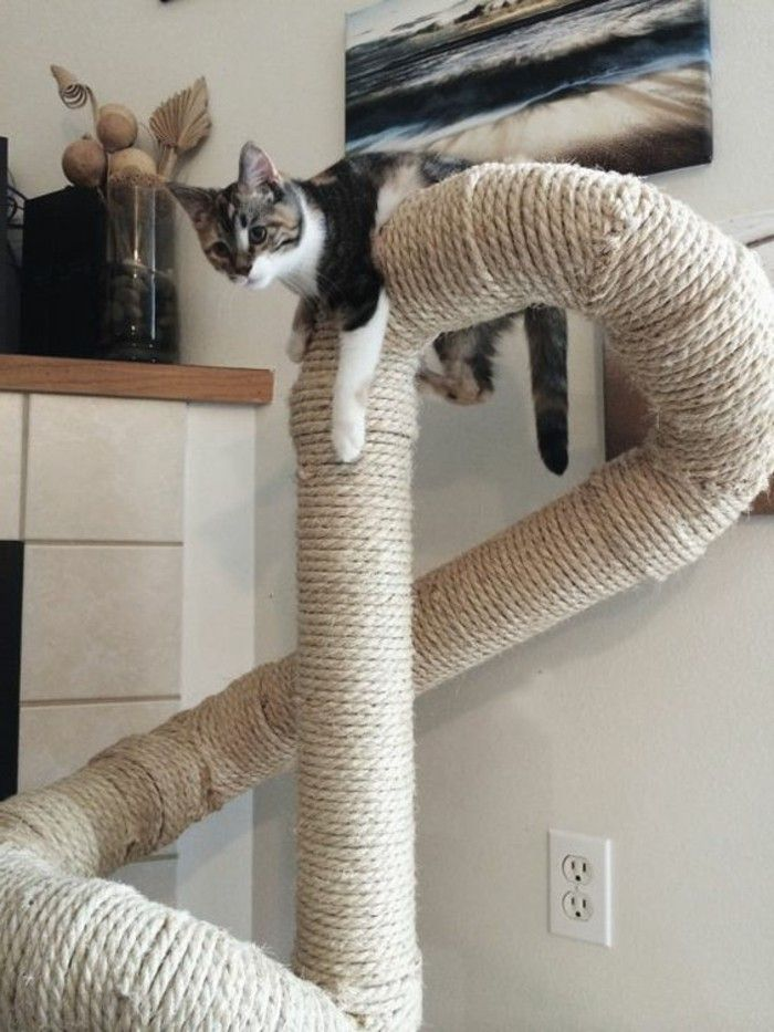 arbre à chats, un grand grimpoir avec sisal et un chat en gris et ...