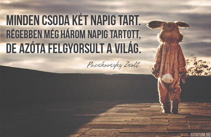 Pacskovszky Zsolt idézet a felgyorsult világról.