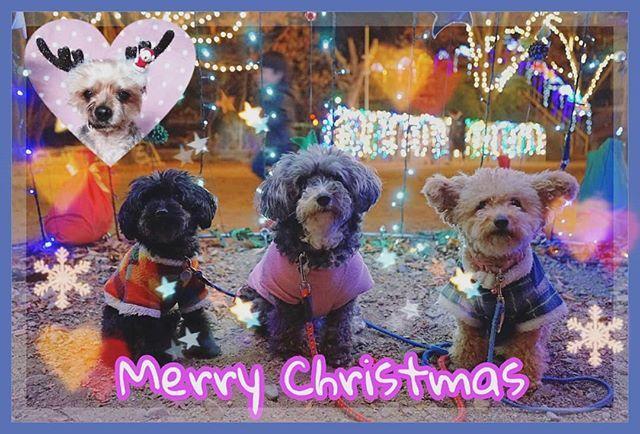 2017-12-24 メリークリスマス🎵🎄🎅🎁✨ みんなに楽しいクリスマスを😊❤ · · · #兵庫#メリークリスマス#クリスマスイブ#愛犬#イルミネーション#キラキラ#アイちゃん#アーロン#こりん#ユウちゃん#サンタ#姫路#アボナリエ#トイプードル#ミックス犬#コギプー#dogs#dogstagram_japan #dogstagram#instadog #toypoodle#yorkshireterrier #christmas#illumination#myfamily