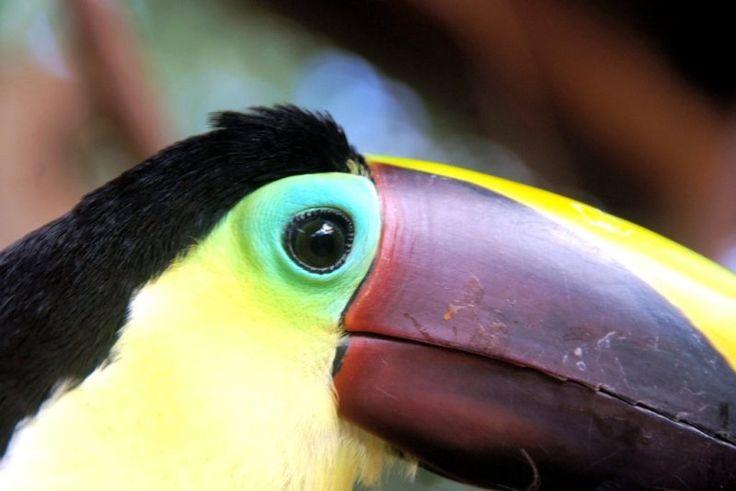 Costa Rica - Toucan - http://www.travelmoodz.com/en/travel-professional/henry-campos
