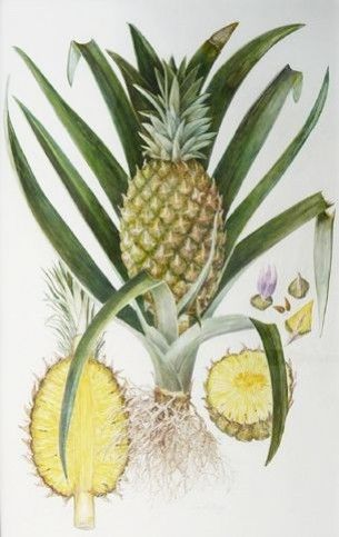 Funky Ananas Impression de dictionnaire vintage Décoration murale Tableau Lunettes de soleil Cool Fruits insolite Restauré LCpVOU
