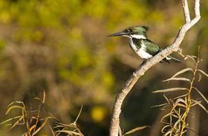 Birdwatching en el Tigre