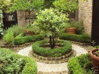 Glimpses of Charleston Gardens in South Carolina | eBay