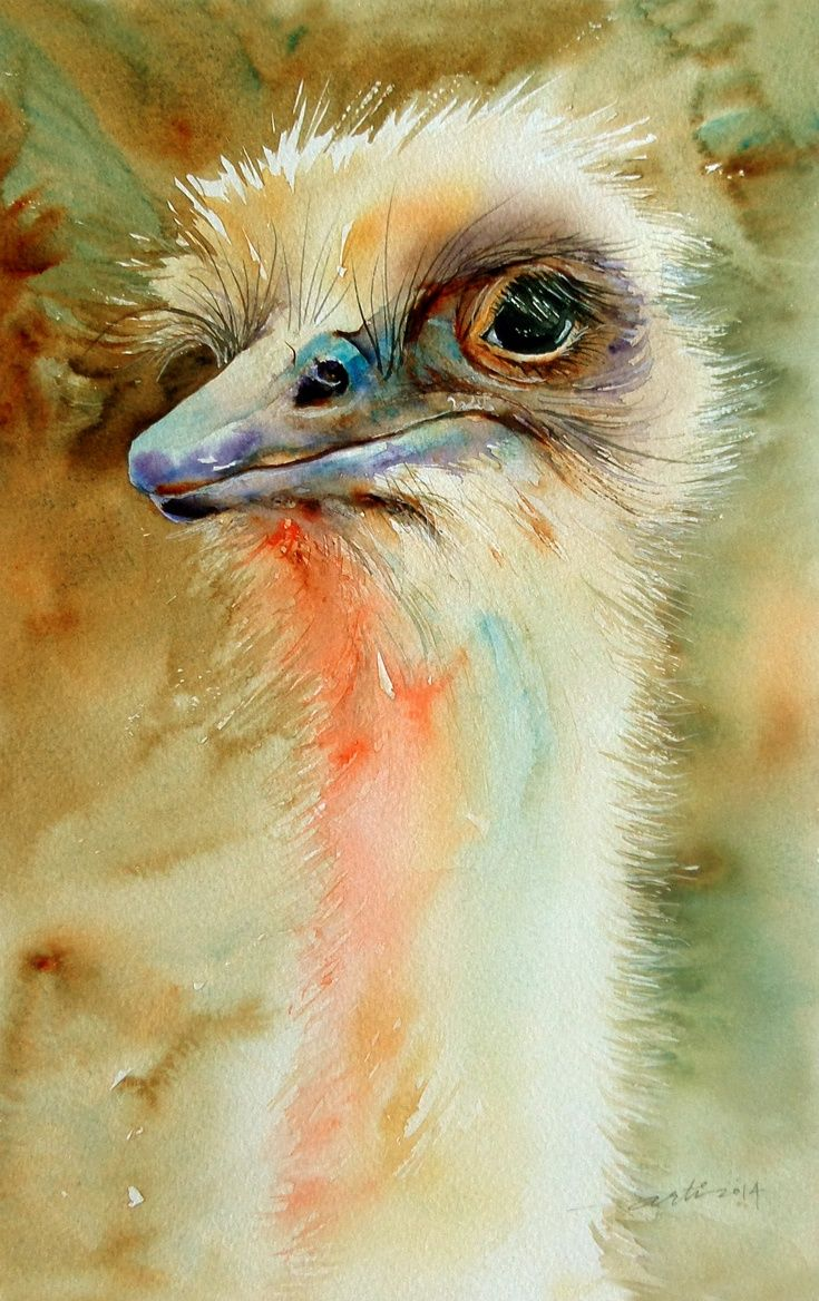 ARTFINDER: Watchful_The Emu by Arti Chauhan - Another portrait of a delightful bird, the Emu from Australia. Emu are slightly smaller than their distant cousins Ostrich, with a feathered head and rudime...