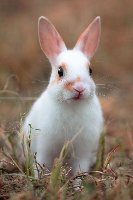 169 Best Images About Lil Bunnies On Pinterest