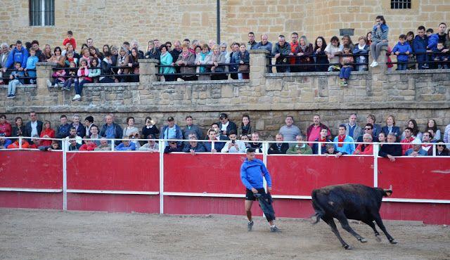 Santacara: Vacas de Vicente Domínguez Fiestas de la Juventud ...