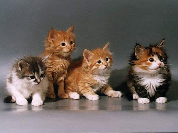 А знаете ли Вы, что кошка имеет 32 мышцы в каждом ухе.  #bububaby #ЗнаетеЛиВы www.bububaby.ru