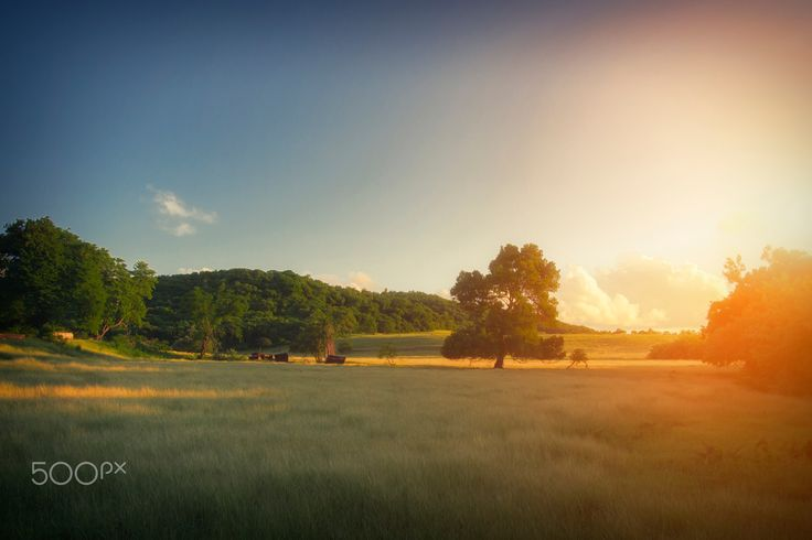 """Martinique, Evening,  Sunset Landscape - Warm Tone Sunset Landscape with beautiful field and tree. From """"Nature"""" photo print series."""