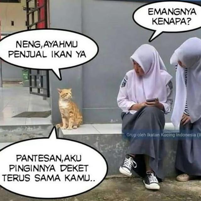Pantes Lahh Aromanya Sedap2 Mantapp Pengen Di Repost Silahkan Dm Tag Jangan Lupa Follo Kucing Manusia Meme