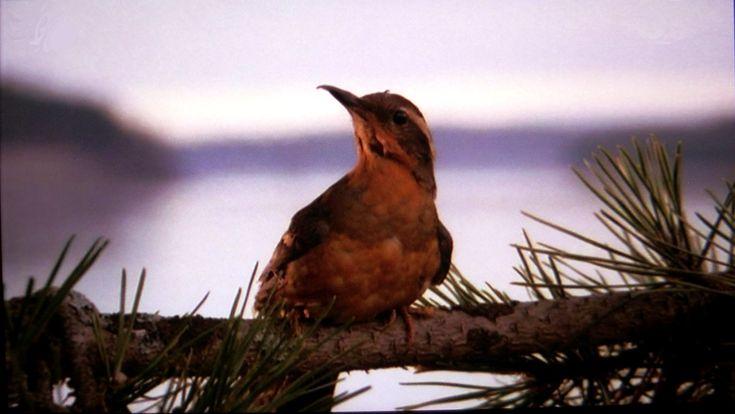 Resultado de imágenes de Google para http://www.bandejadeplata.com/wp-content/uploads/2012/07/The_Twin_Peaks_pajaros.png