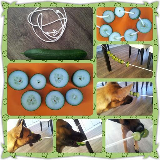 Cute idea but I don't think my dog will realise cucumber is food.