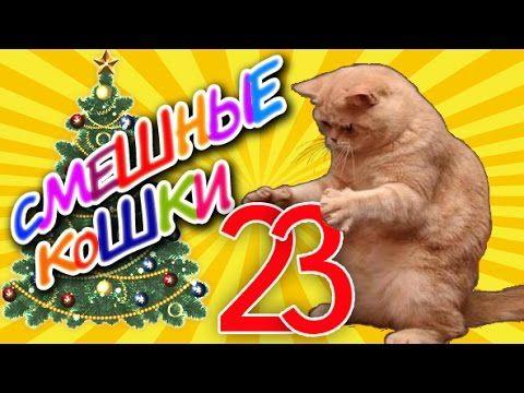 Смешные кошки 23 ● Кошки и Ёлки - Приколы с животными 2015 ●  Funny cats vine compilation - Part 23