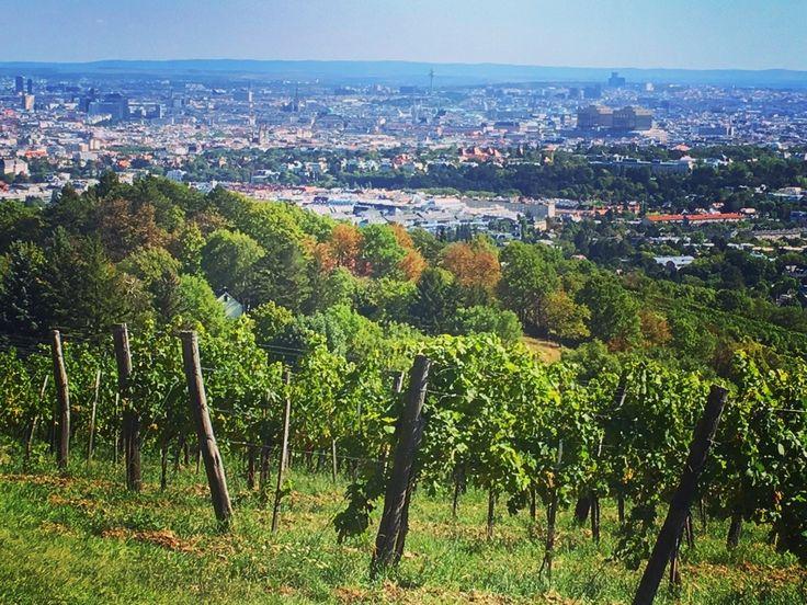 Wien ungefähr von der Bellevuewiese aus (2017)
