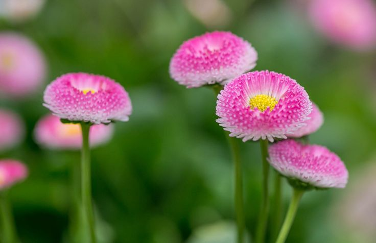 Pretty in Pink by Saima h. on 500px