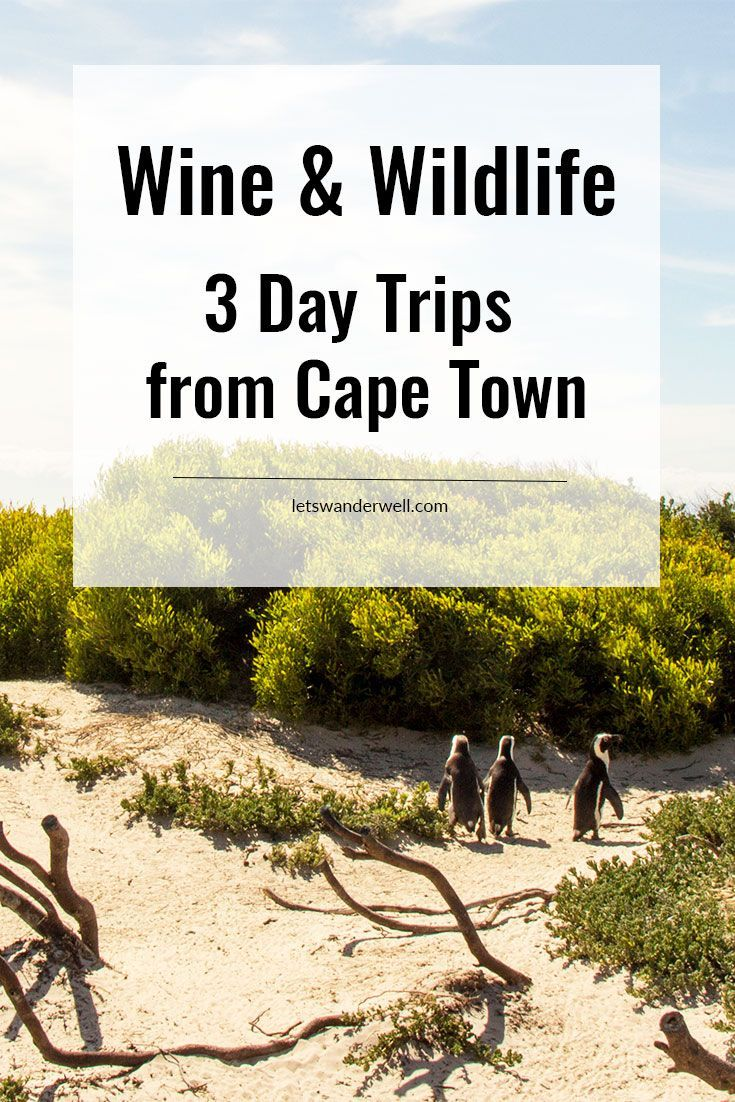 Three can't-miss day trips from Cape Town, South Africa for wine and wildlife lovers. via @letswanderwell. Travel in Africa.