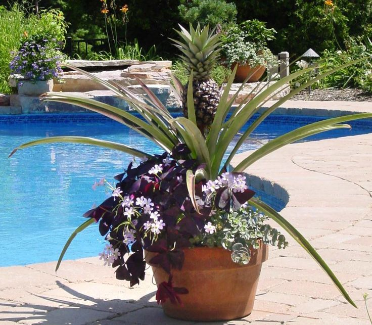 Tropical container gardening google search vegetables and fruits in containers and patio - Tropical container garden ...