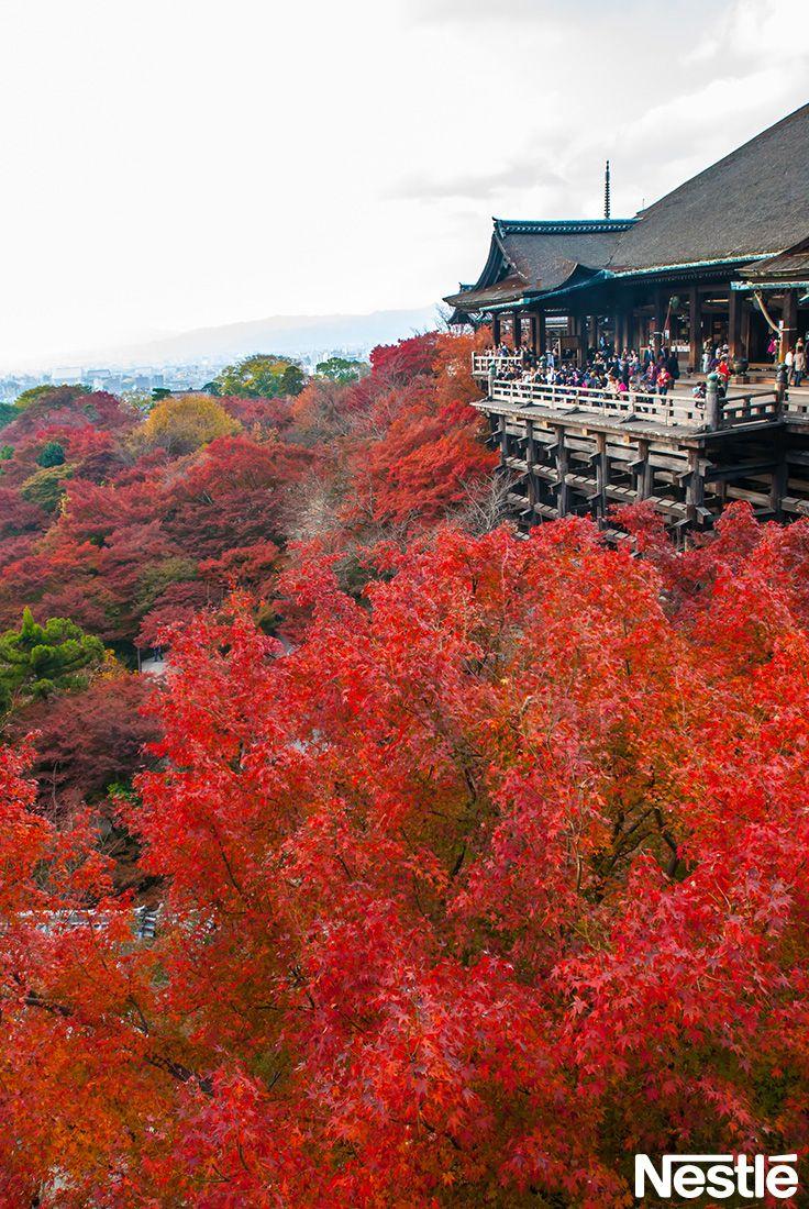 画像D:かの有名な清水寺です。私は毎年に見に行ってます♪