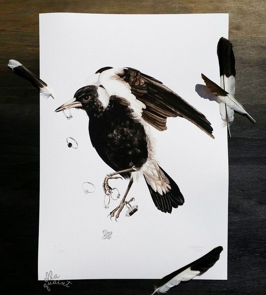 Magpie  a watercolour and indian ink illustration by ellaquaint