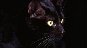 Просмотреть обои кот, взгляд, темный, тень 1920x1080