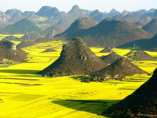 Luoping Rapeseeds flower field,Yunnan,China