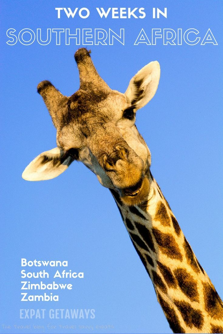 Expat Getaways has planned the perfect two week itinerary for Southern Africa. Covering Botswana, South Africa, Zimbabwe and Zambia and visiting the highlights of Victoria Falls, Chobe, Okavango Delta and Cape Town. Use this to plan your next Africa travel!