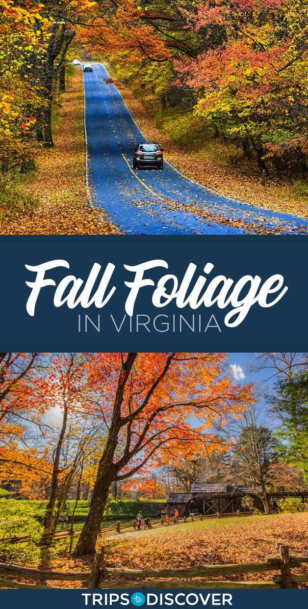 7 Best Places To See Fall Foliage In Virginia
